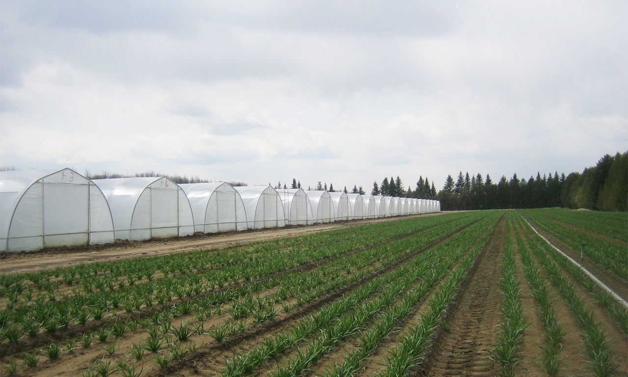Cold Frame Greenhouses | Paul Boers Manufacturing