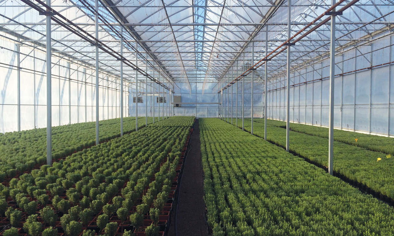 Gutter Connect Greenhouses